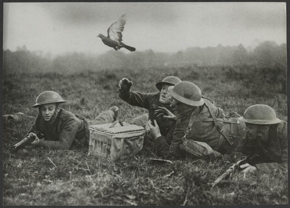H2000 200 423 - Un Pigeon est envoyé porter un message