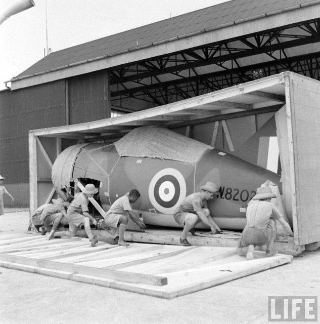Brewster F2A Buffalo Serial Number W8202 RAAF 453 Squadron 001.sized - Arrivée de F2A-3 neufs pour la RAF