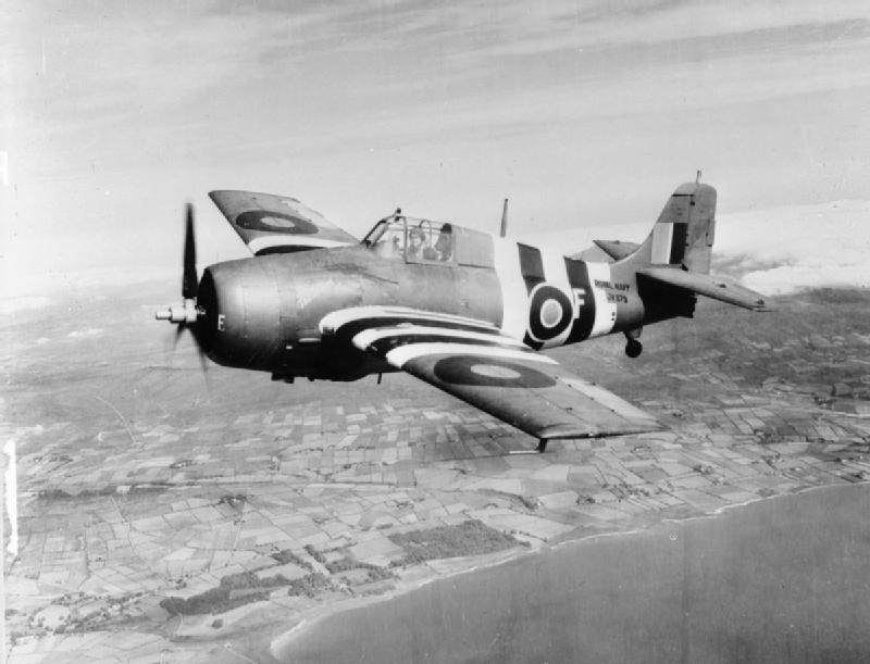 The Royal Navy during the Second World War A24529 - Un Wildcat en 1944, arborant les bandes d'invasion (invasion stripes)